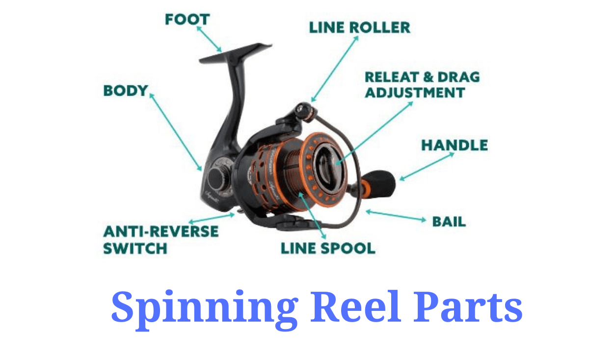 Spinning Reel Parts